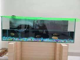5 oscar with aquarium 45lx15hx10wdth inch