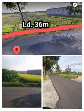 Lahan 6700m2 zona Kuning/Pemukiman Jl.Penggung Jatinom