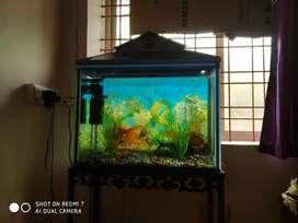 Fish aquarium with iron stand and pump