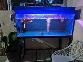 Aquarium ikan arwana