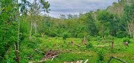 Di jual tanah cocok untuk lokasi perkebunan dan peternakan ayam