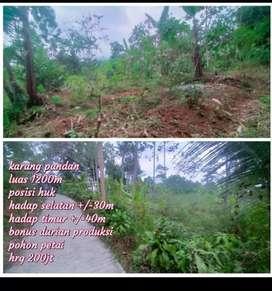 Dijual tanah di Karangpandan Tawangmangu solo