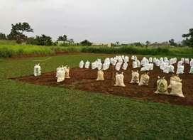 Tukang Taman jual  rumput Trima jasa pembuatan kolam