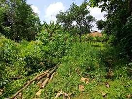Tanah Kebun Harga Nego Dijual Murah di Pasawahan Dekat Kota Purwakarta
