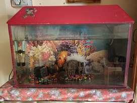 2.5ft aquarium tank with cap in very good condition