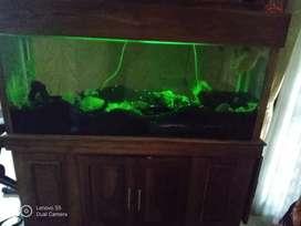 Aquarium ikan air laut