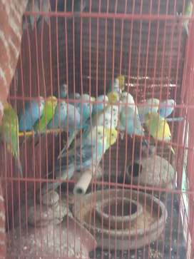 Cage for sell 600