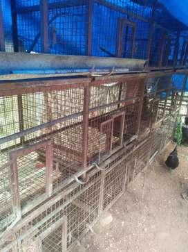 2 high tech cage