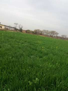 2 Kanal home with Agricultural land on monthly 60000rental basis