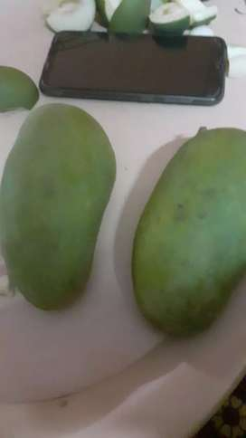 Raw mangoes for trade