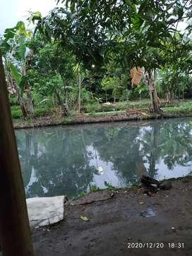 Kerjasama kolam ikan air deras atau tambak.