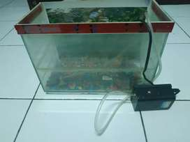 Aquarium + air pump