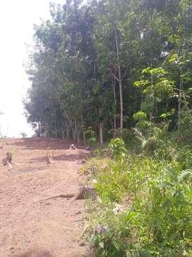 Tanah Desa Lebak Parahiang Kecamatan Leuwidamar Kabupaten Lebak Banten