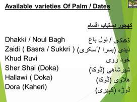 Dates Plants for sale