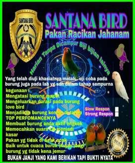 Khusus love bird gacooor
