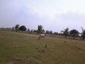 Thirumalpur land for sale