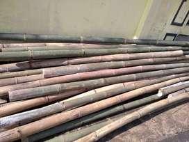 Bambu untuk cor bangunan