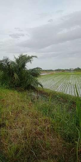 Tanah Sawah 5 Hektare Dipinggir Jalan Besar