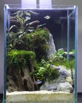 Aquascape Mini Yogyakarta