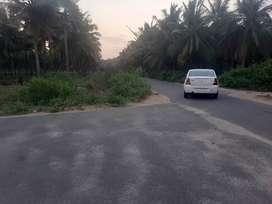 Coconut farm/Agricultural land/Agriculture land/Agriland/Coconut farm