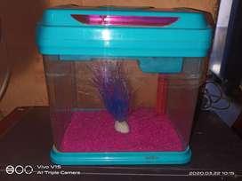 Mini square aquarium