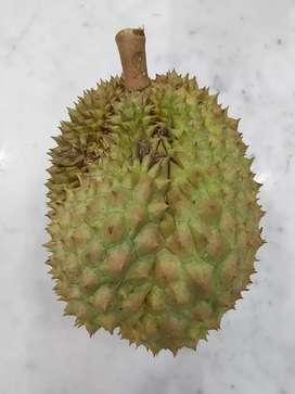Durian Utuh Montong Thailand (harga per 100 gram)
