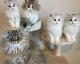 All types cats