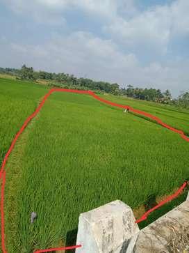 Jual Cepat Tanah Sawah cocok untuk Bangunan komersil