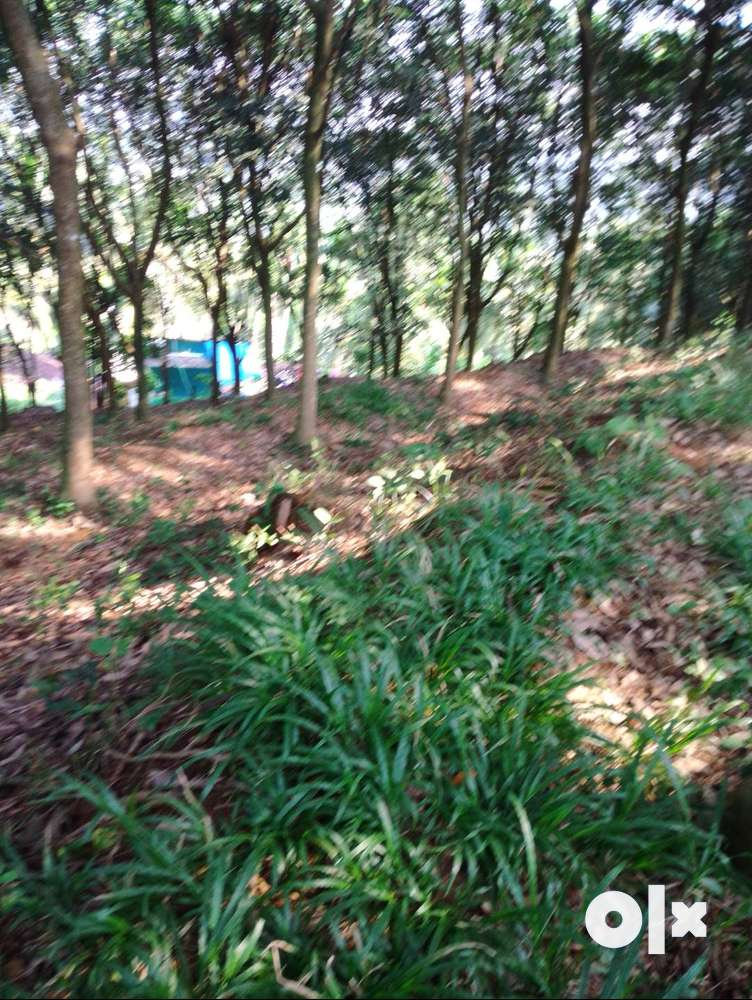 good residential land for sale,malaparmba,calicut