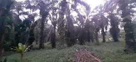 Dijual kebun kelapa sawit seluas 4 hektar