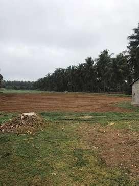 Coconut farm/agriland/agriculture land/agricultural land/farmland