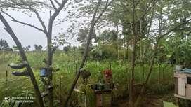 Di Jual Tanah Jln pembangunan Namorambe Gg mesjid