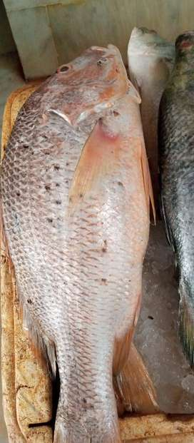 We sell Fresh Seafood, Chicken,mutton,Beef at your home Free Delivery
