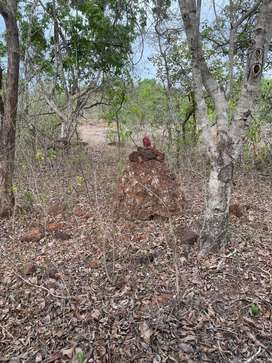 Apx 12 Acres Prime Locatin Agricltural land near Forest Valpoi, Goa
