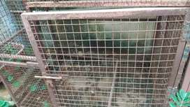Dog cage available