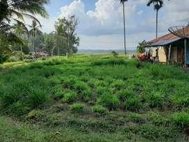 Dijual lahan pertanian