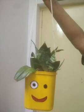Flower pot home decoration