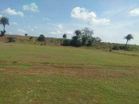 Form house LAND Birbira village Near ganod and Navaraipur