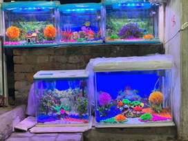 We deal in all types of glass aquarium , molded tank fishes