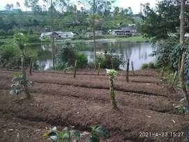 Tanah kebun kopi pengalengan dekat situ cileunca