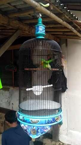 Kandang Kapsul Lovebird Ebod Mobile Legends