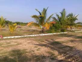 C m d a approved plot sale. Behind all India radio stn,