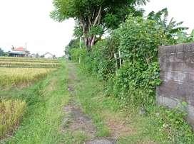 Jual tanah murah di Buleleng, Tanah siap bangun cocok untuk rumah