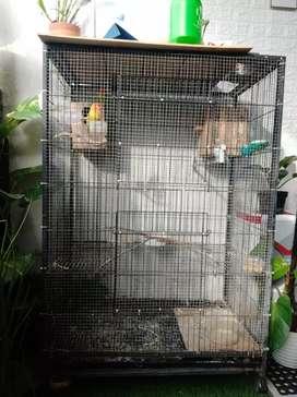 Kandang kucing/kandang burung 2 tingkat ukuran 1m x 1,5m