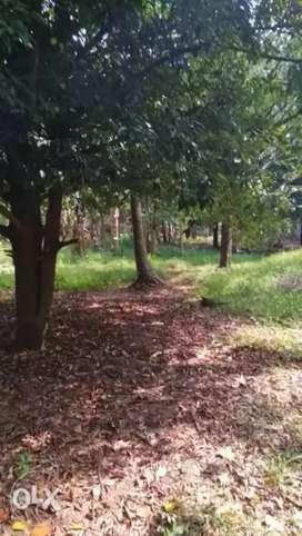 Land for sale in vettukad  20 cent, near Kerala pazhani