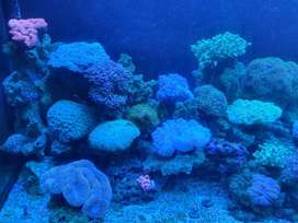 coral marine aquarium 1 year old 120cmx40cm