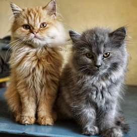 All types of kittens and cats