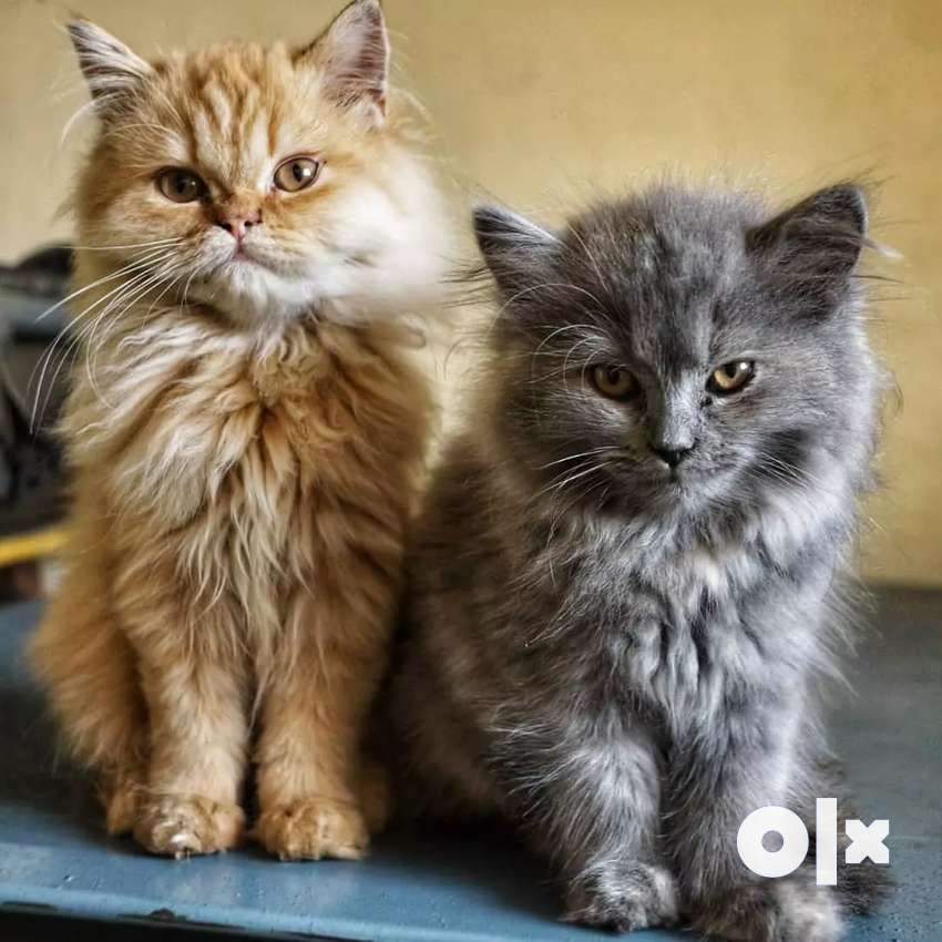 All types of kittens and cats 0