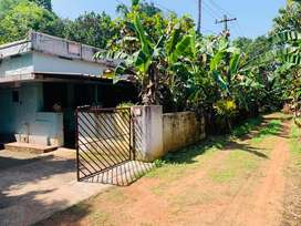 Aluva uc college 11.5cent old house cent 8lakh