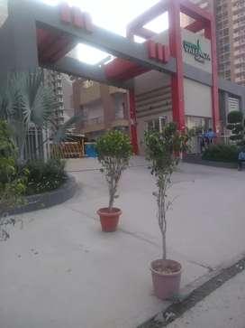 3bhk semi furnished flat for rent in Gaur Chowk Gr Noida west